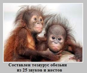 тезаурус обезьян