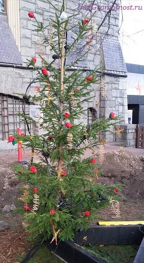 парад елка с лесенками и розами