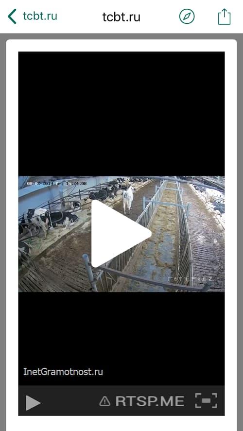 online камера у поставщика молока
